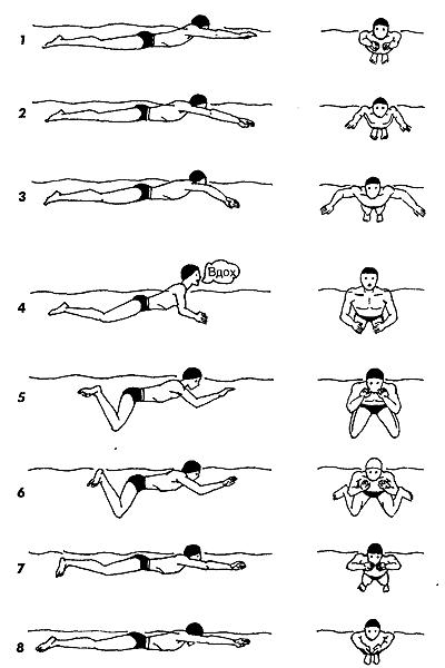 брасс техника плавания фото